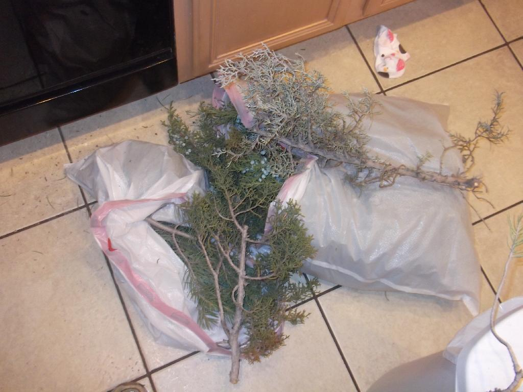 Pine and Juniper boughs in bags
